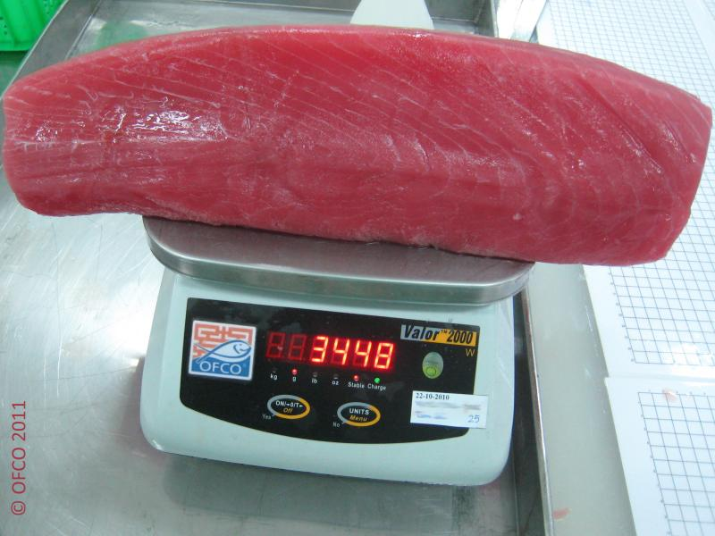 Yellow Fin Tuna loin CO treated - Thunnus albacares