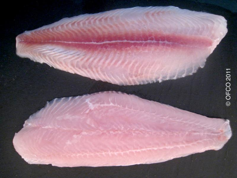 Pangasius (swai or tra) fillet semi trimmed belly partially OFF red meat On skin Off fat OFF - Pangasius hypophthalmus